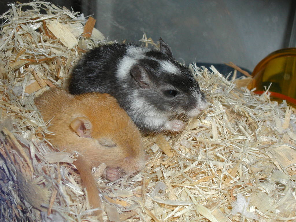 Gerbils generally are fairly