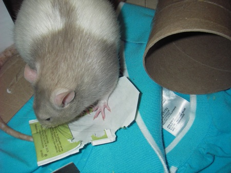 Rat Tea