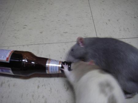 Rats Beer Bottle